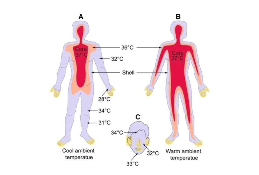 Principle of Thermal Imaging Temperature Measurement 2